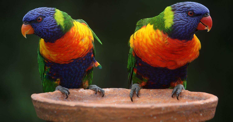 Bird Baths for Sale