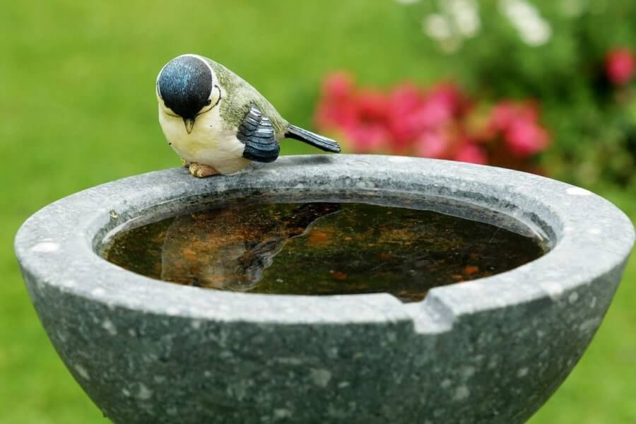 Why Are The Birds Not Using My Bird Bath Bird Baths For